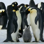 penguins-429128_1280