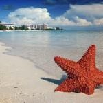 starfish-1122849_640